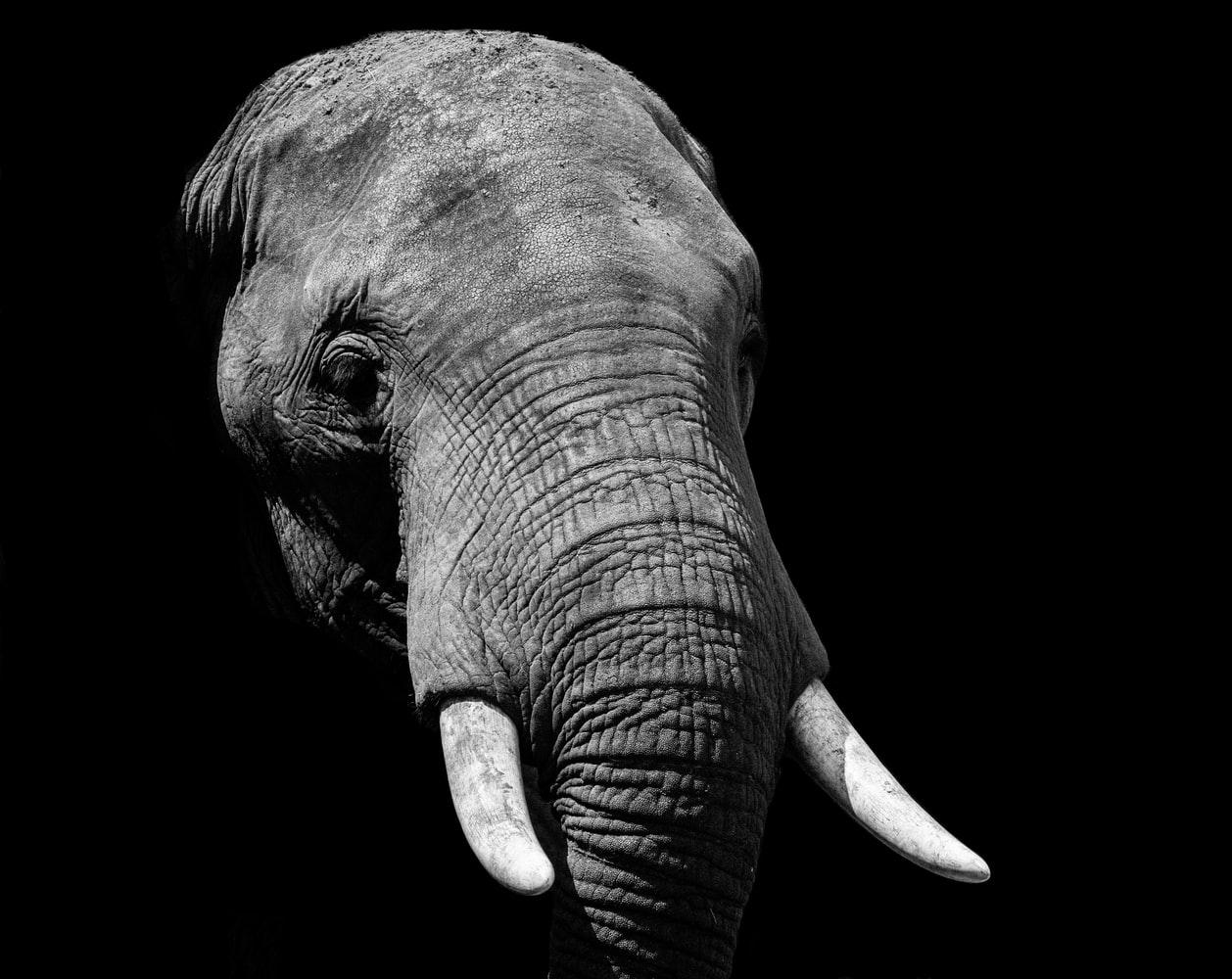 Elefante sob o sol